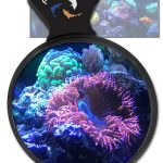 Flipper Deep See Magnetic Magnified Coral Viewer