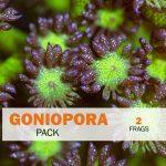 Goniopora Package