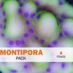 Montipora Package